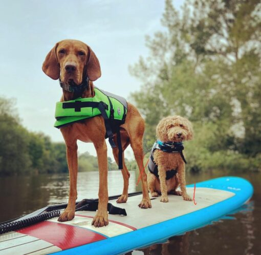 SUP hire Shrewsbury River Severn Paddleboarding